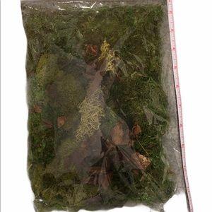 Moss kit, Reindeer moss by Ashland